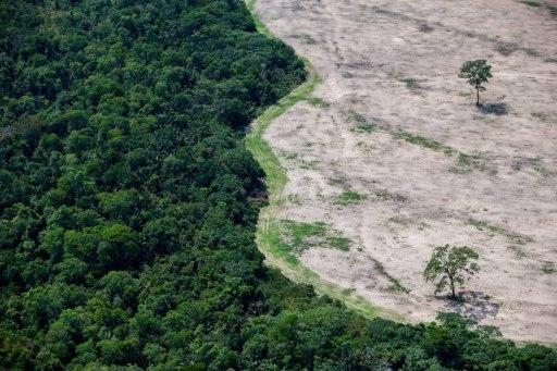 Após repercussão negativa, governo revoga decreto que acaba com reserva na Amazônia