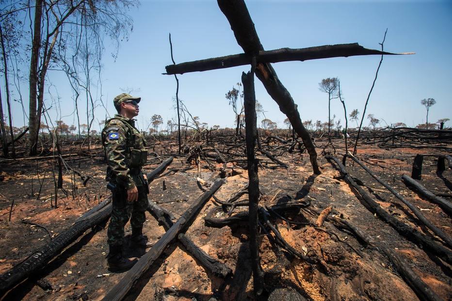 Brasil perdeu 9,5% das florestas entre 2000 e 2014