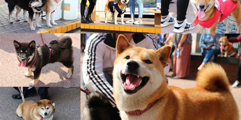台南 柴犬大學狗狗聚會活動