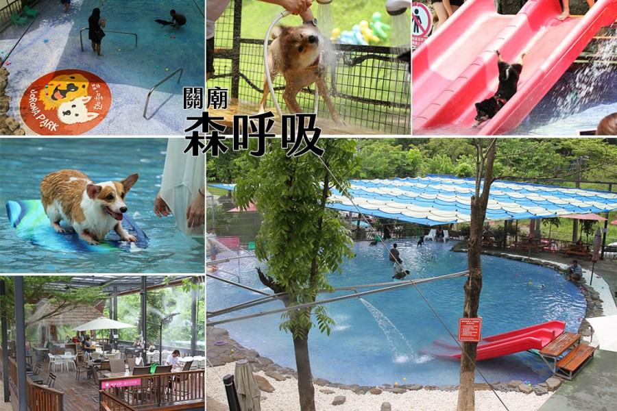 台南 夏天也要帶毛小孩一起清涼一夏,台南狗狗玩水的遊樂園,寵物放電率100趴的好所在 台南市關廟區 森呼吸寵物休閒廣場