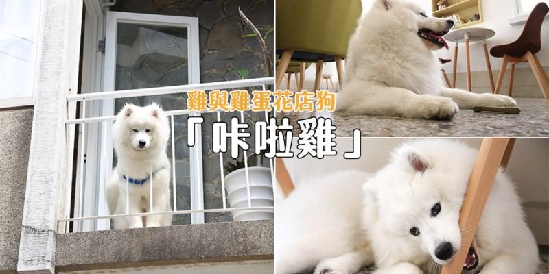 台南 遠看像是小白熊,近摸觸感毛茸茸,讓人想在店裡狂擼的超萌店狗咔啦雞 台南市北區 薩摩耶-咔啦雞 雞與雞蛋花