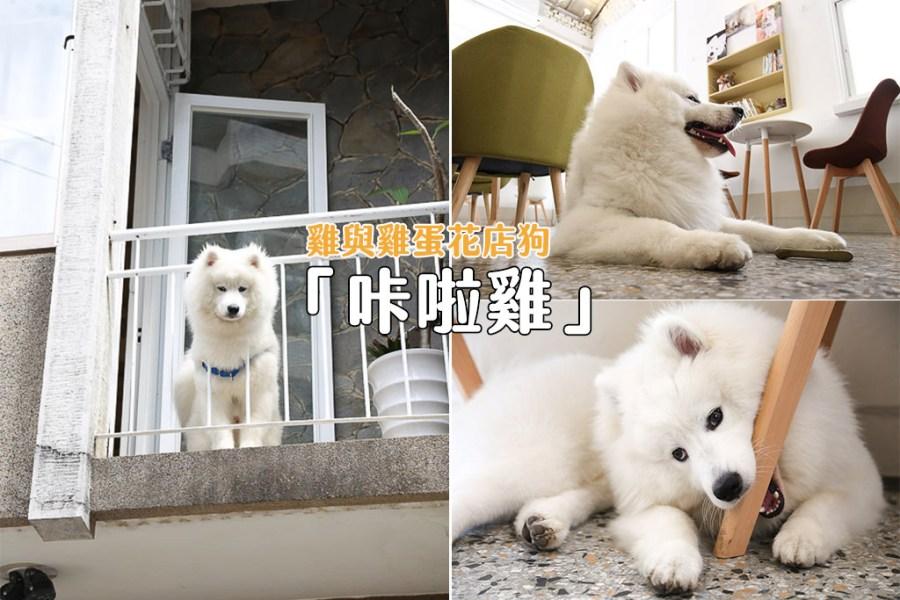 台南 遠看像是小白熊,近摸觸感毛茸茸,讓人想在店裡狂擼的超萌店狗咔啦雞 台南市北區|薩摩耶-咔啦雞 雞與雞蛋花