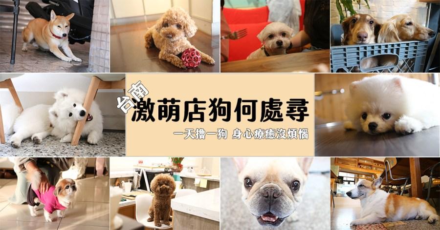 台南有哪些店狗?一起來探索在台南各處的激萌店狗吧!