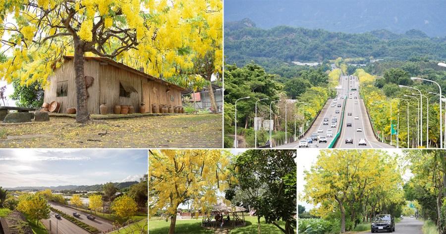 什麼!台南全面染黃中,阿勃勒花季台南開花景點蒐藏中