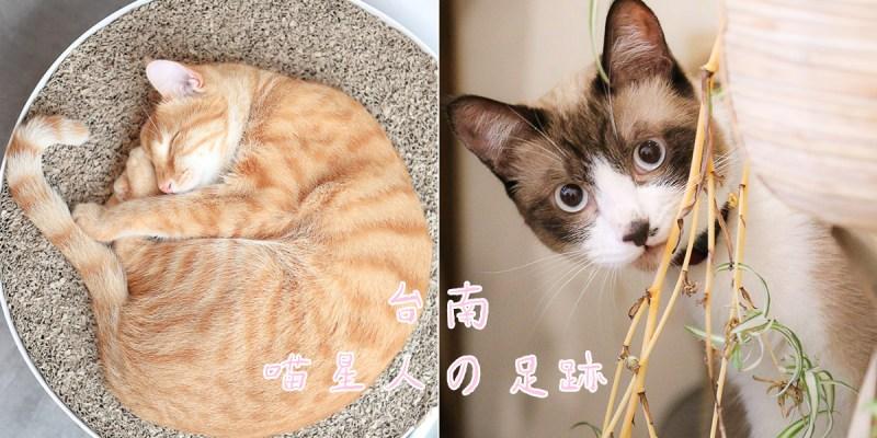 台南有哪些店貓?一起來探索在台南各處的激萌喵星人吧!