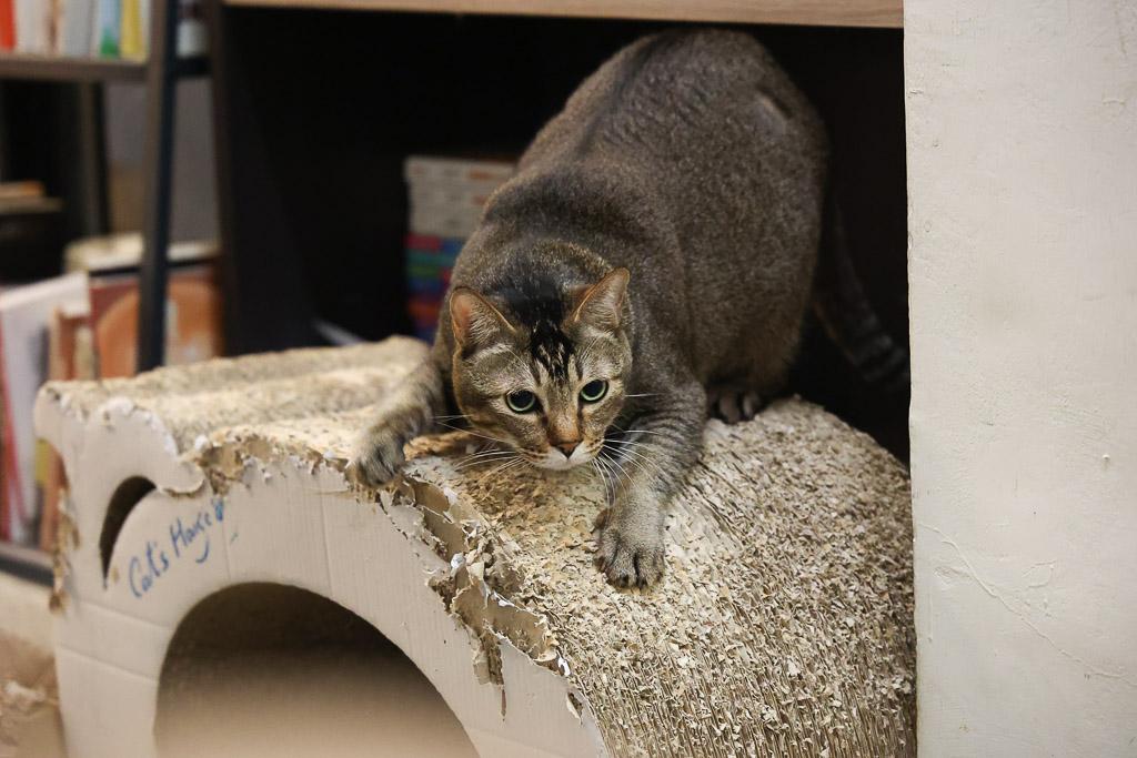 萌貓照,各種喵星人的超萌姿勢,療癒度滿點