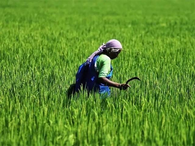Indian Government Announces New Farmer Pension Scheme