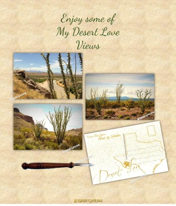 Ocotillo Photo Postcard -...
