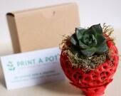 Mini Succulent Kokedama -...