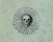 Skull with Ornate Frame L...