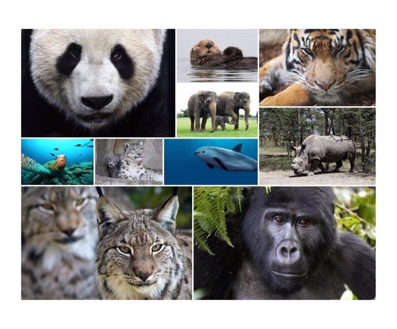 Resultado de imagen para 10 animales en peligro de extincion en el mundo