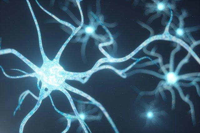 Identifican un circuito cerebral que podría señalar el riesgo a desarrollar Alzheimer, Periódico San Juan