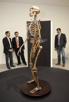 Esqueleto De Un Neandertal Que Forma Parte De La Exposición
