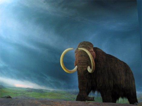 Clonarán un mamut lanudo
