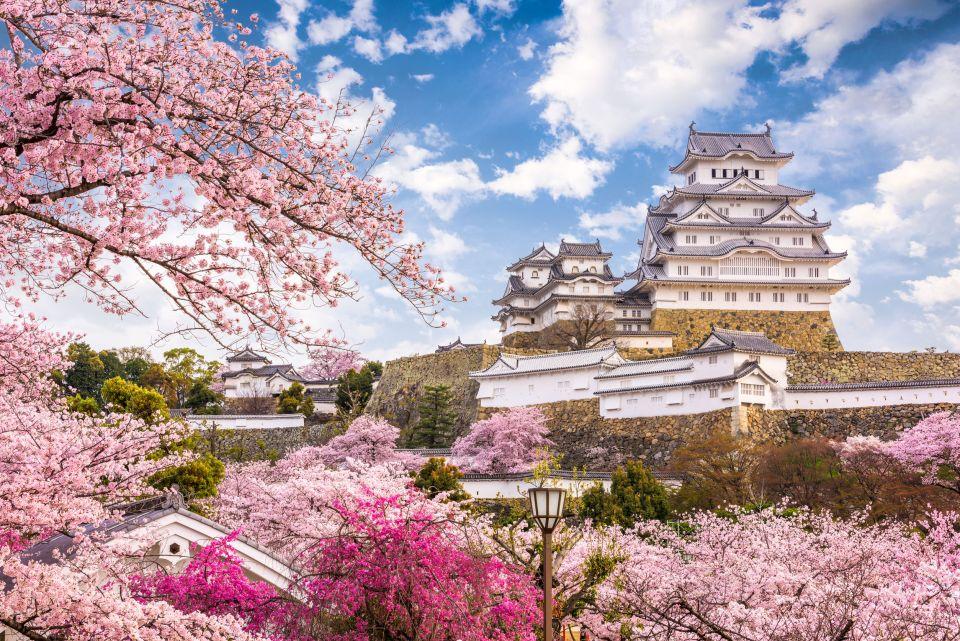 printemps au japon les cerisiers