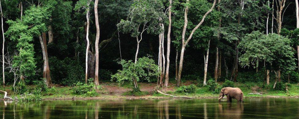 Le foreste , Congo