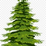 Evergreen Tree Pine Drawing Fir Png 1742x2589px Evergreen Branch Christmas Decoration Christmas Ornament Christmas Tree Download