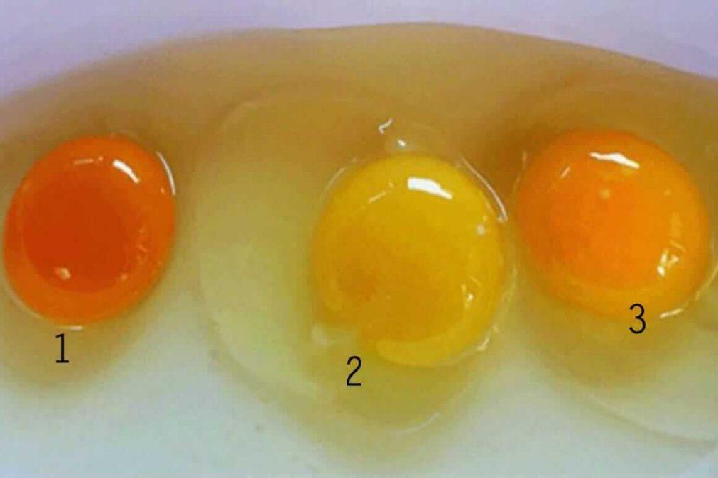 O que diz a cor da gema do ovo?