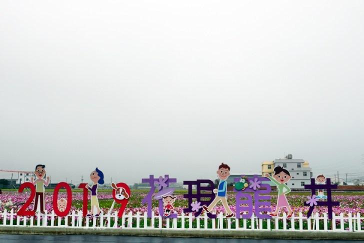 20190112011209 17 - 台中景點|龍井花海~2019花現龍井 美麗的波斯菊花海 裝置藝術好吸睛