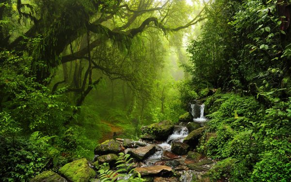 Forest HD Wallpapers