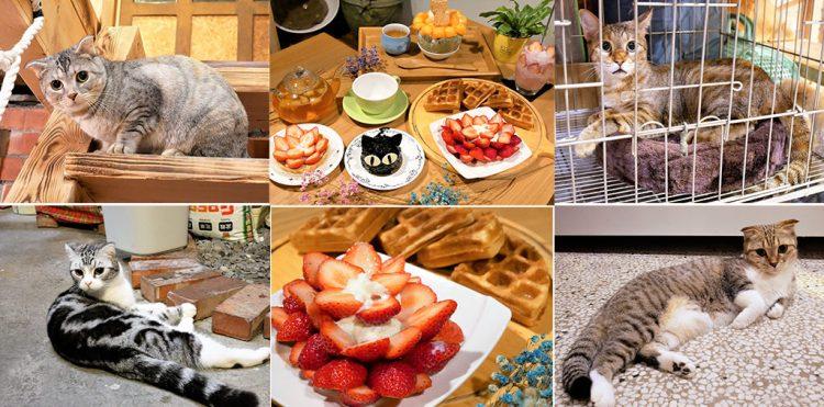 【台南-北區美食】巷弄裡的美味下午茶冰品點心,四隻喵星人陪妳一起渡過一個慵懶得午茶時光