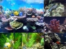 Fish Aquarium Video Screensaver