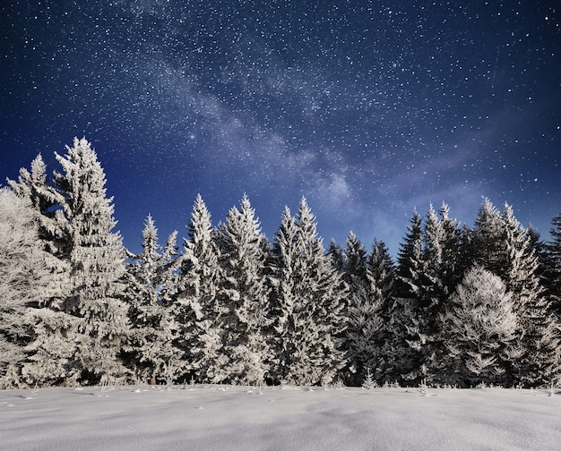 Magical winter snow covered tree. winter landscape ...