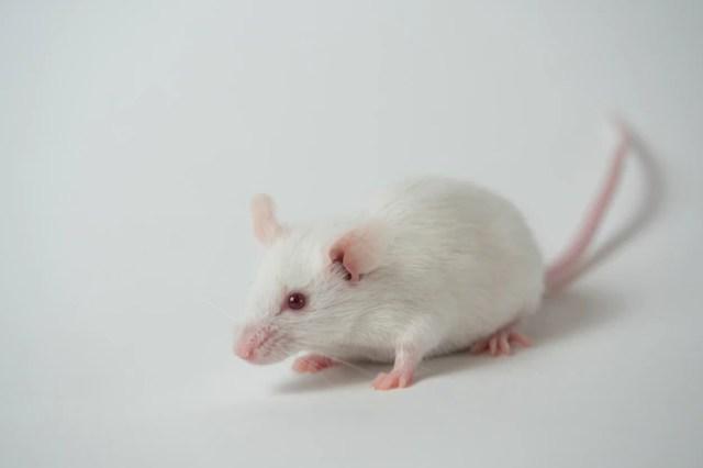 Premium Photo | White mouse on white surface