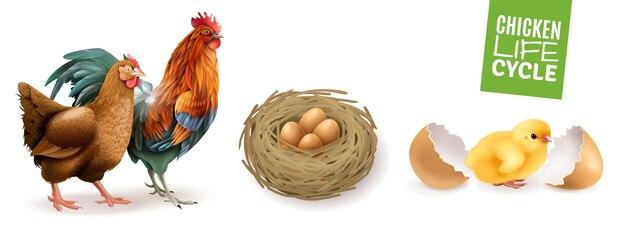 Изображения Яйцо цыпленок   Бесплатные векторы, стоковые ...
