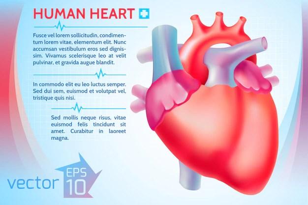 Human Heart Images 9 553 Vectors Photos