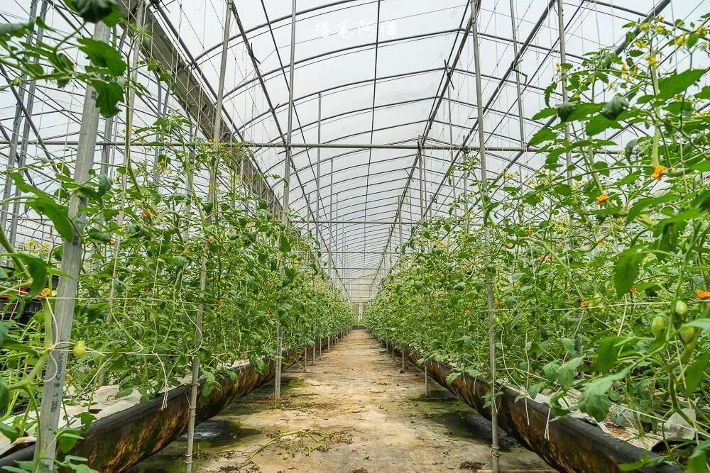 彰化花壇好農趣   茉莉花的故鄉在哪你知道嗎?沒錯花壇!但是除了花,小農也有閃耀的光芒~ 9