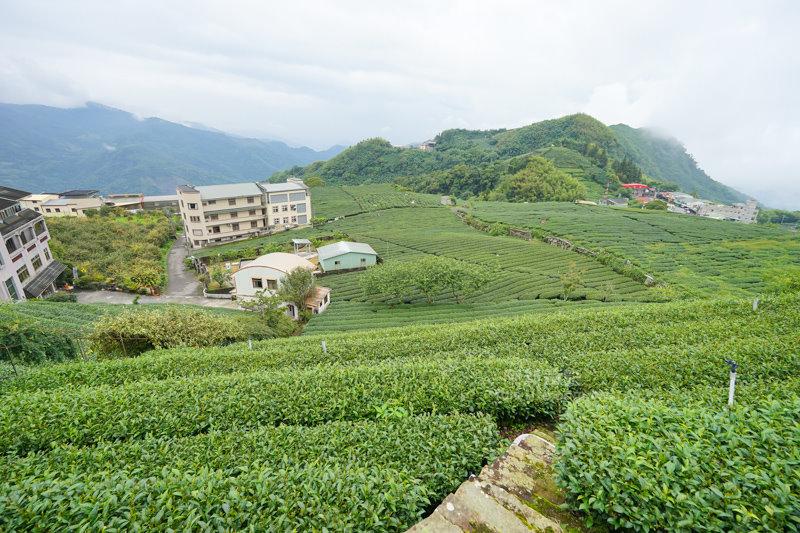 林園製茶-06