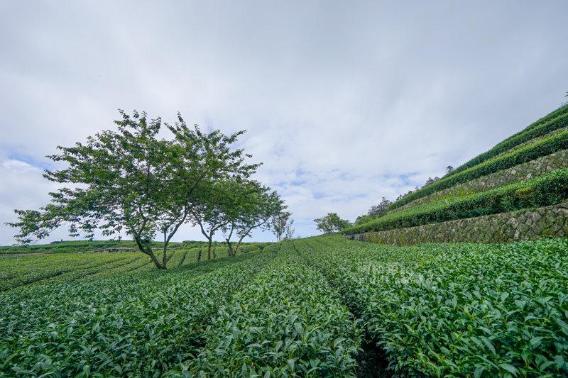 林園製茶-30