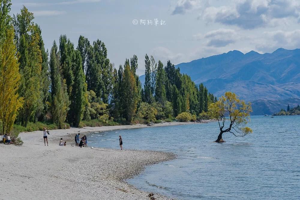wanaka tree,瓦納卡之樹,水中樹,wanaka水中樹,紐西蘭自由行,紐西蘭自住,紐西蘭旅遊