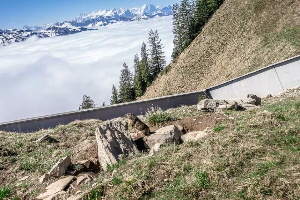 瑞士石丹峰stanserhorn,瑞士石丹峰,stanserhorn,石丹峰,瑞士stanserhorn,瑞士旅遊-42
