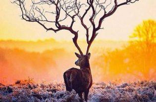 [攝影技巧]大自然借位「枯樹+麋鹿」