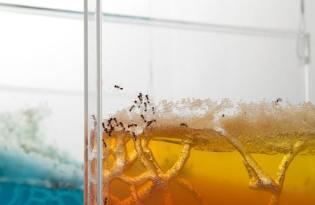 [視覺傳達]螞蟻築巢裝置藝術「Live/Work」