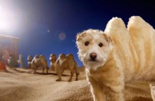 [服裝設計]搞笑狗狗服裝攝影藝術