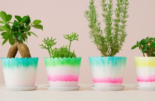 [文創設計]日本UMA出品「CMYK吸水盆栽」