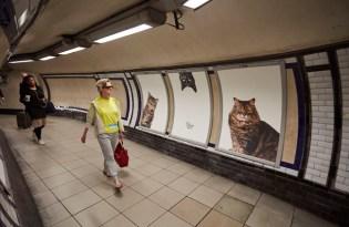[創意行銷]CATS倫敦喵星人車站募資計畫