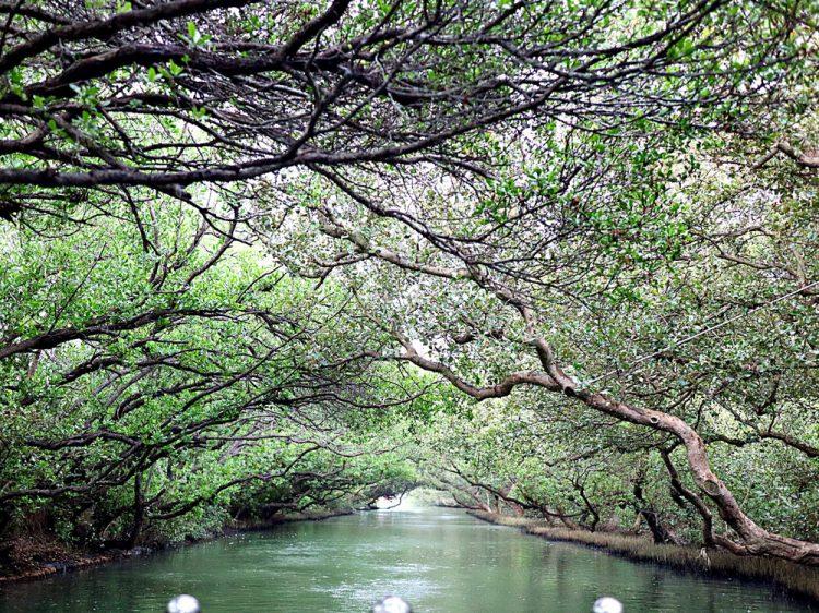 大台南必訪景點系列-安平區|四草綠色隧道:擁有台灣小亞馬遜河之稱的綠色隧道,必搭!竹筏遊四草濕地生態