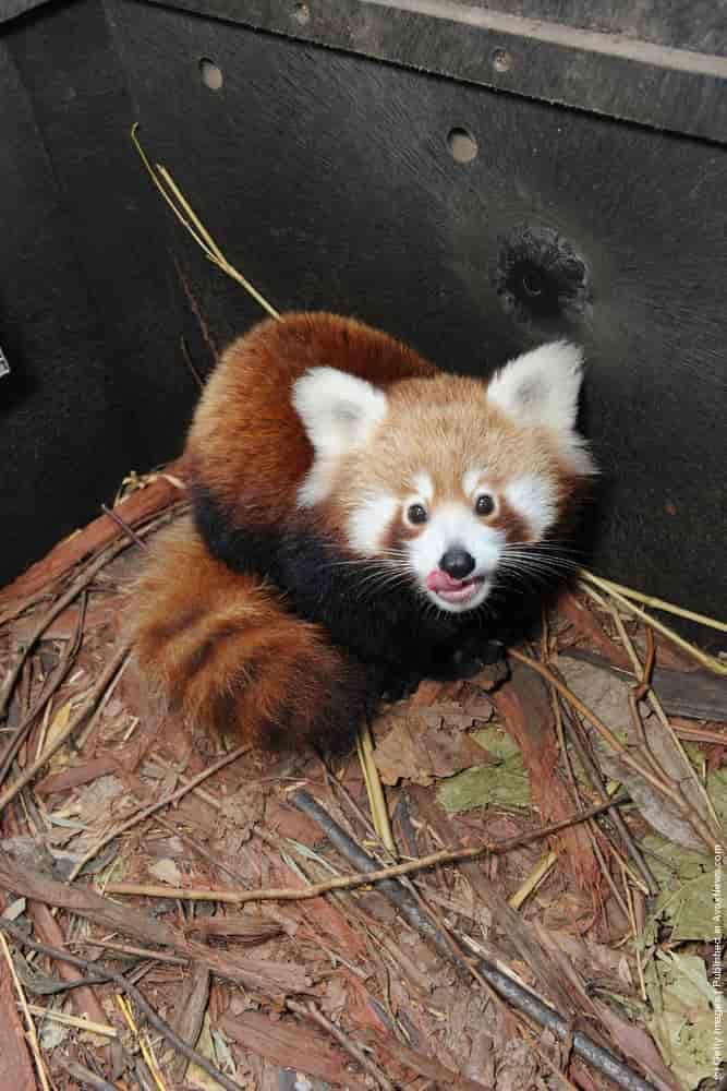 2013 Christmas Zoo