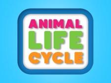 动物生命周期