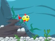 最幸福的鱼