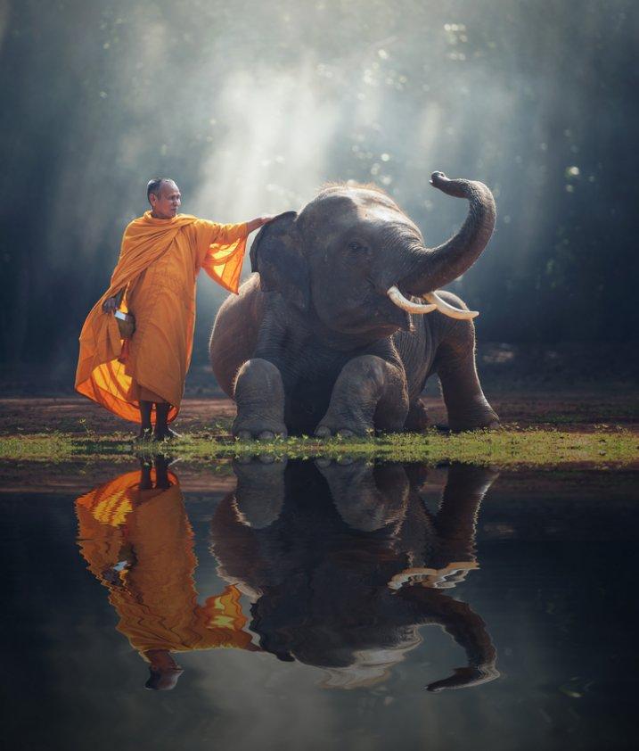 invataturi buddha, citate buddha