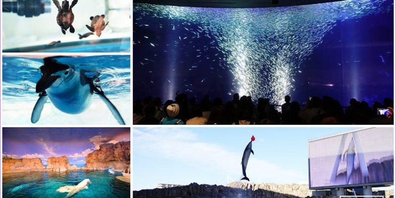 名古屋親子景點~名古屋港水族館必看表演、優惠門票、交通攻略,旋風沙丁魚音樂光影秀超精彩
