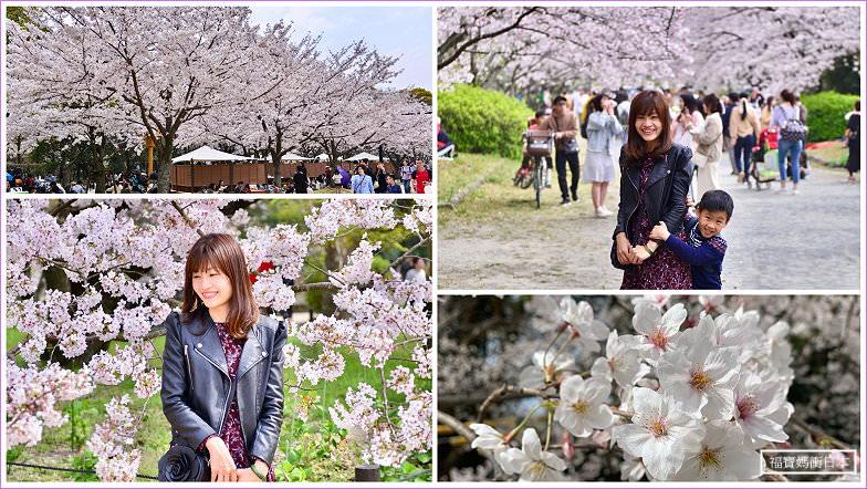 【福岡櫻花景點】舞鶴公園、福岡城跡賞櫻路線,福岡最熱門的櫻花景點
