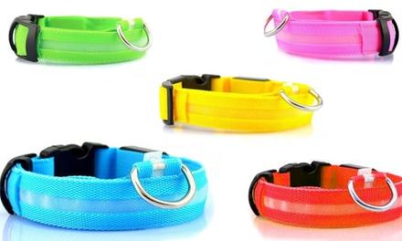 Collare per cani con luce LED disponibile in 5 colori e varie taglie