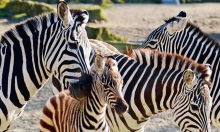 Allwetterzoo in Münster: beleef veel dieren van dichtbij met een dagticket voor 1 volwassene of 1 kind