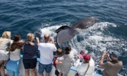 Whale Watching and Dolphin Cruise from Davey's Locker (Up to 68% Off). Three Options Available.
